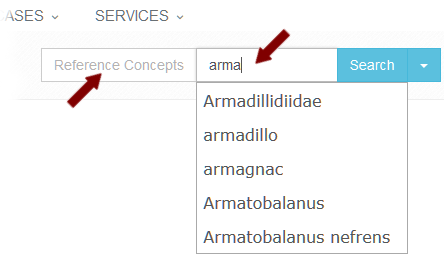 Concept Search Autocompletion